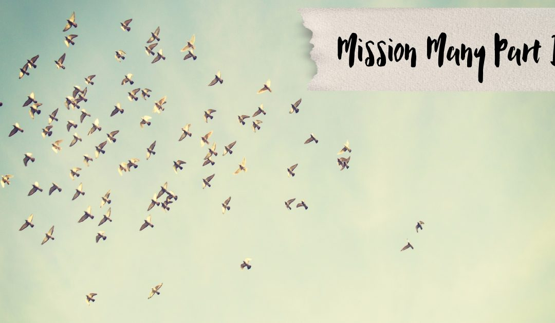 Mission Many Part 2: I've got plans!